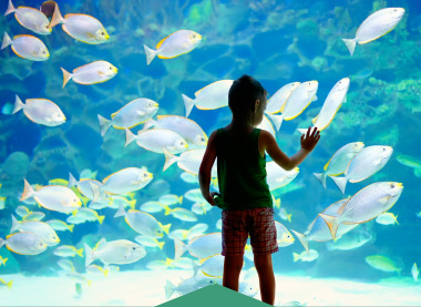 Kid in the Biarritz Aquarium