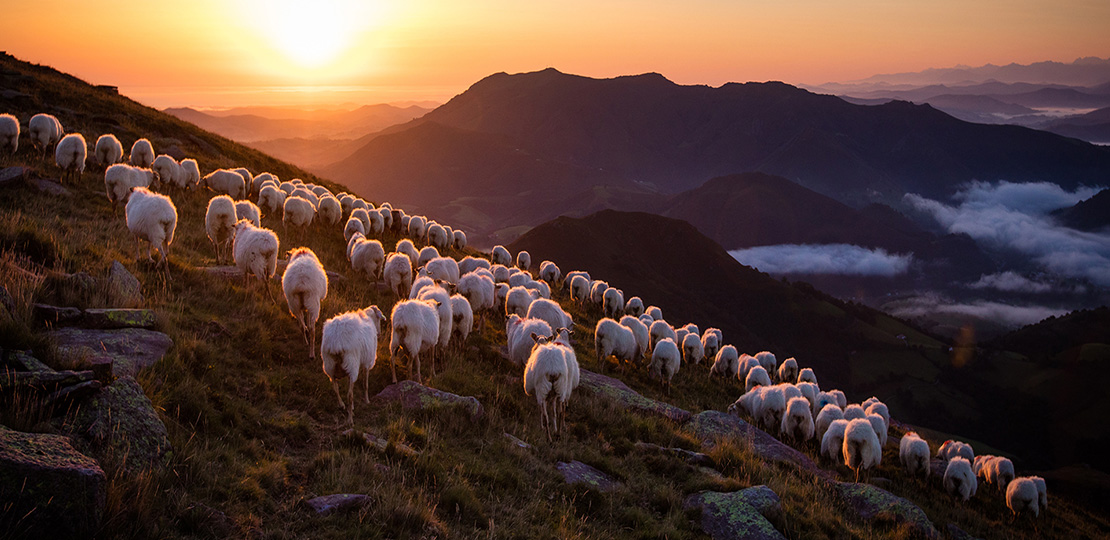 Herd of sheep on the mountains of the Basque Country